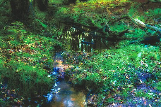 Dreamy Forest, in Coldharbour, Surrey by Eyeswide