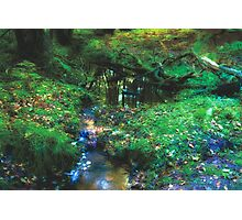 Dreamy Forest, in Coldharbour, Surrey Photographic Print