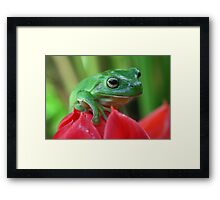 Green tree frog on red ginger flower Framed Print