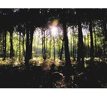 Coldharbour Forest in Surrey Photographic Print