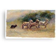 Kelpie Trial - Working Dog Canvas Print
