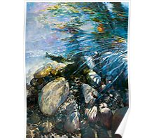 Dappled Trout in Rock Hollow - Fly Fishing Series 2 Poster