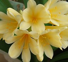 Yellow Clivia (2692) by ScenerybyDesign
