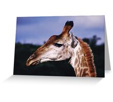 Who's there? - Hluhluwe-Umfolozi, South Africa Greeting Card
