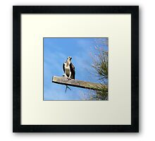 Osprey with his Catch Framed Print