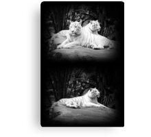WHITE SIBERIAN TIGERS ON ROCK  Canvas Print