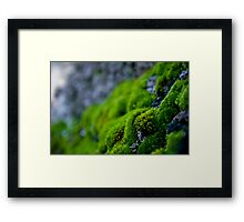Mossy Micro Scape Framed Print