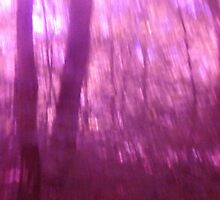 Magick in the Wood n°2 by edend