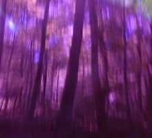 Magick in the Wood n°3 by edend