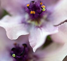 Delphinium by Andy Freer