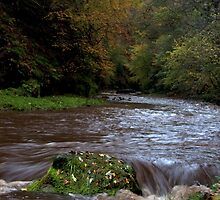 Autumn river, Roslin Glen, Scotland by Michael Marten