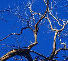 Dead Tree Blues - Tarrawanna NSW by CasPhotography