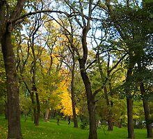 Autumn. by Vitta
