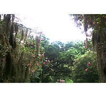 The Gounds Of the Myrtle Plantation Photographic Print