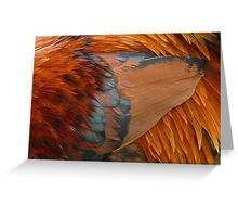 Cockrel Feathers Greeting Card