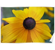Yellow daisy on the brink Poster