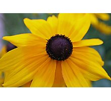 Yellow daisy on the brink Photographic Print