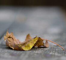 Autumn - Raleigh NC by Rachelle Vance