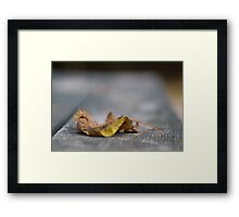 Autumn - Raleigh NC Framed Print