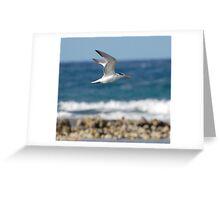 Seagul in flight Greeting Card