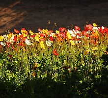 Field of Dreams - Chicago Botanic Gardens by DianeBUhlman