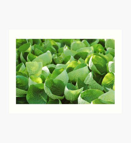 Leafy Greens - Chicago Botanic Gardens Art Print