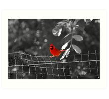 Bird on a Wire - Cardinal @ Brookfield Zoo, Chicago Art Print