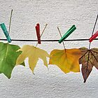 autumn leaves by robertpatrick