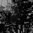 web by aurelie k
