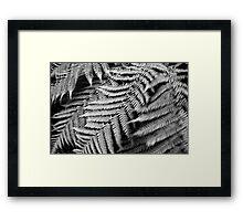 windy fern Framed Print