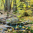 Fern Spring, October by William Hackett