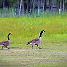 Pick Up the Pace, Ethel, She's Gaining On Us! by WeeZie