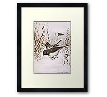 Buntings In The Snow Framed Print
