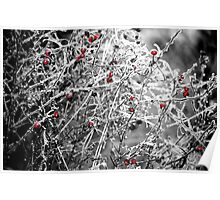 Nature's Christmas Ornaments Poster