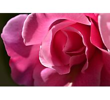Pink Rose Heart Photographic Print