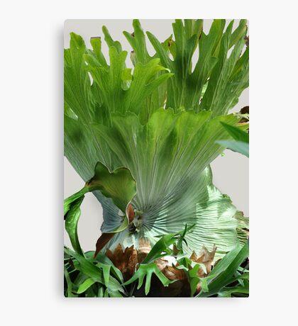 Super Salad Canvas Print