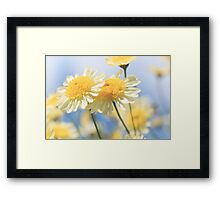 Dreamy Sunlit Marguerite Daisy Flowers Against Blue Sky Framed Print
