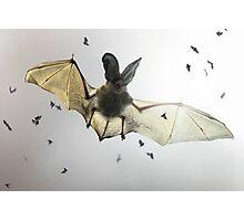 Hungry bat Photographic Print