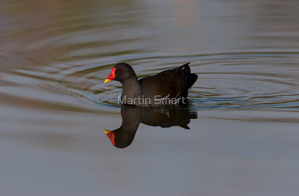 Reflected Beauty by Martin Smart
