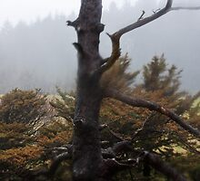 Twisted Tree by Julia Washburn
