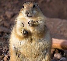 I'll start my diet tomorrow! by Sue  Cullumber