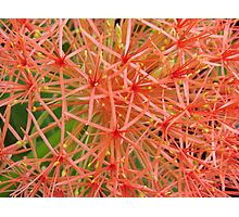 Red Ball-(Floral Macro) Photographic Print