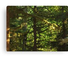 Trees and Moss Canvas Print