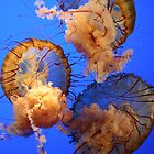 Jellys in the deep blue by Teresa Williams