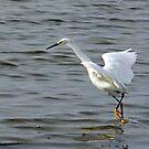 Snowy Egret # 3 by hatterasjack