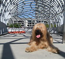 Oscar at Webb Bridge, Melbourne, Australia #2 by BriardRescue