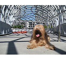 Oscar at Webb Bridge, Melbourne, Australia #2 Photographic Print
