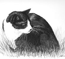 Cat in the Grass by Heather Ward