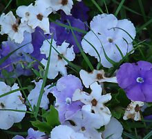 Purple & White-(Today & Tommorrow)-(Floral Macro) by Martice