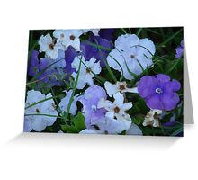 Purple & White-(Today & Tommorrow)-(Floral Macro) Greeting Card
